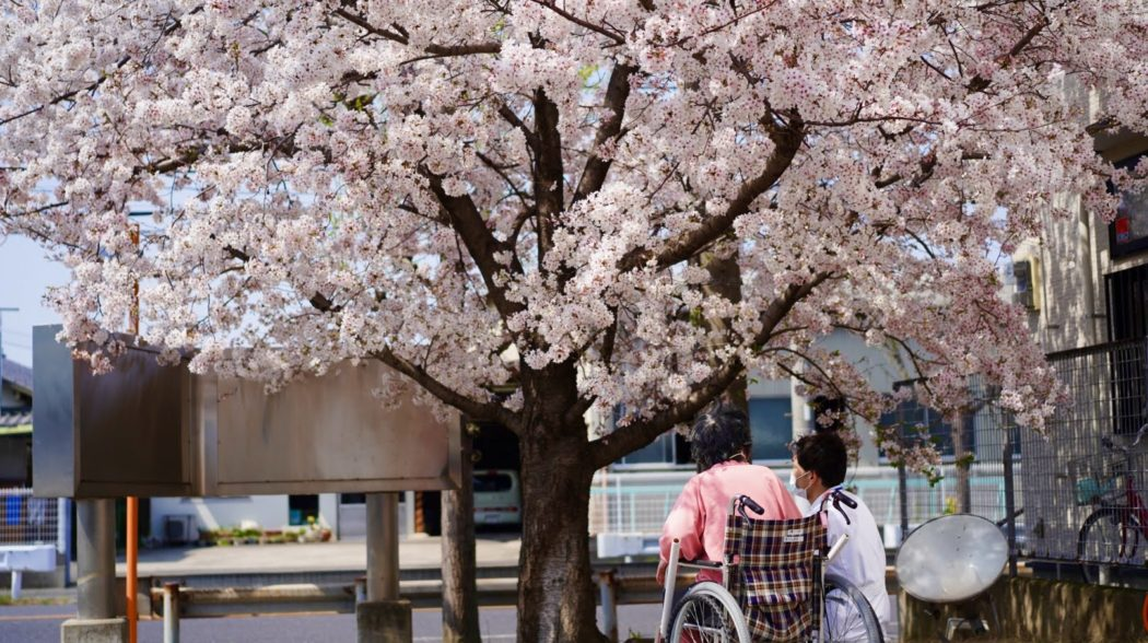 桜の花をお届けする企画、今回が最終回です🌸のアイキャッチ