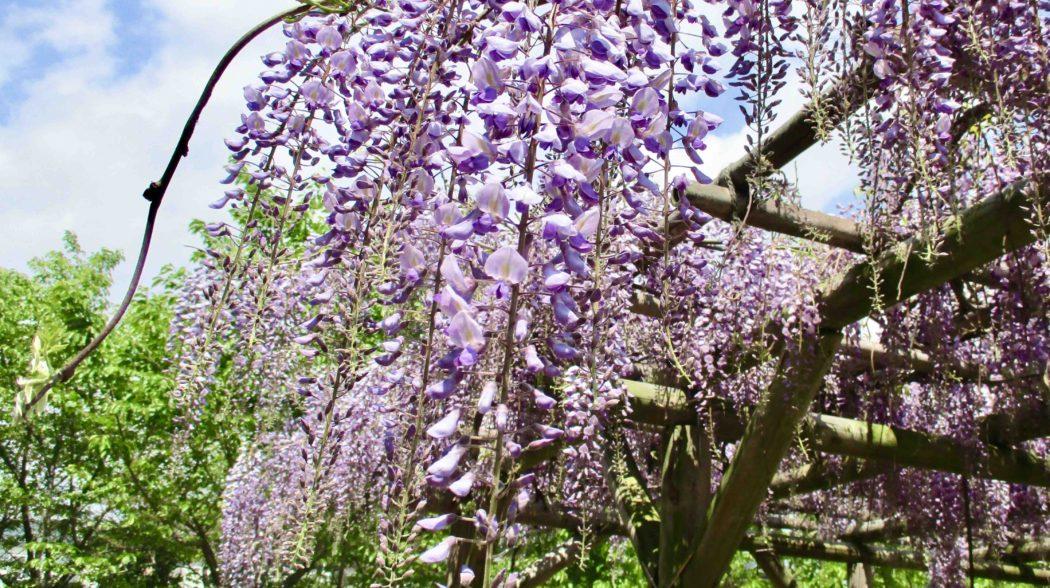 グループ病院・施設に咲く、多彩な季節の花をSNSで紹介します!のアイキャッチ